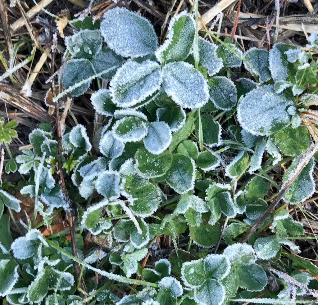 Frost on leave